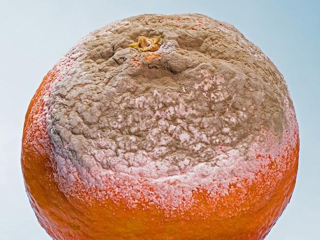 Mold orange